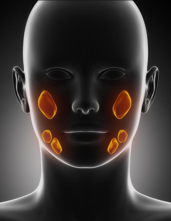 Salivary Gland Infection | New Health Guide