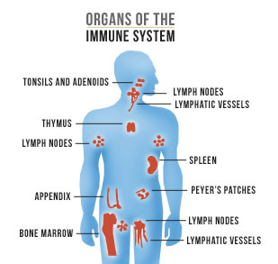 immune system | new health guide, Human Body