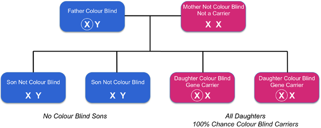 Can Women Be Color Blind New Health Guide