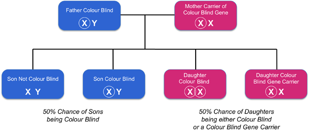 Can Women Be Color Blind?