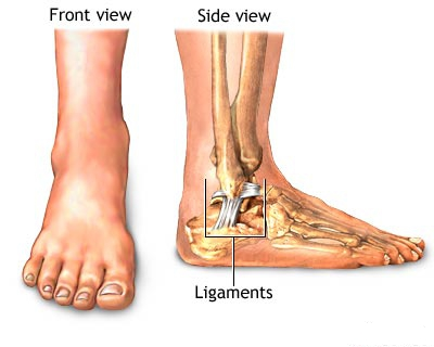 what are ligament functions? | new health guide, Human Body