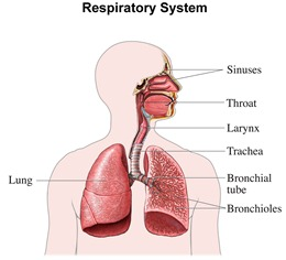 respiratory disorders new health guide